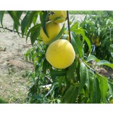 Regenerative Agriculture China Use Case