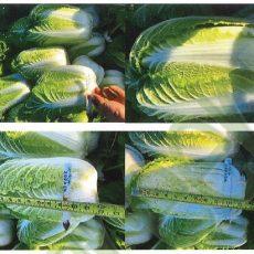 Regenerative Agriculture for salads