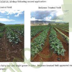 Regenerative Agriculture – zucchini – Test report